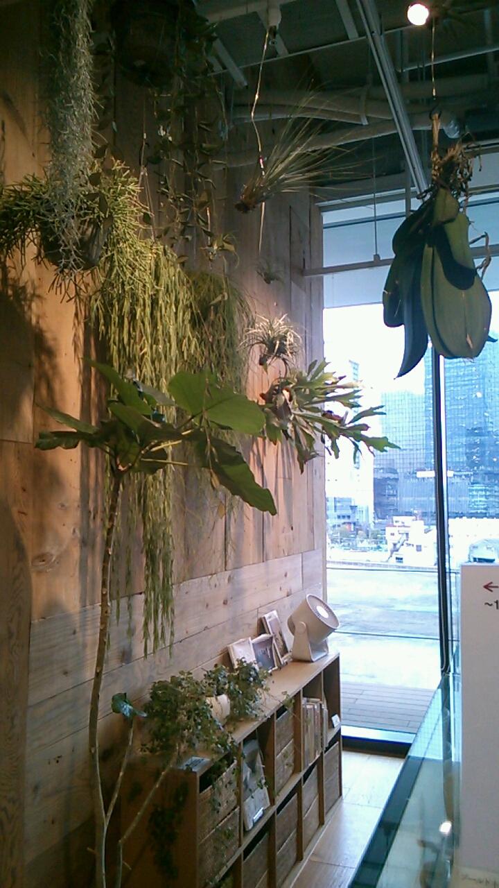 観葉植物の活かし方